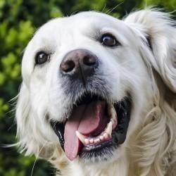 Gebitsreiniging bij huisdieren